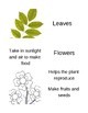 Parts of a Plant Matching Game