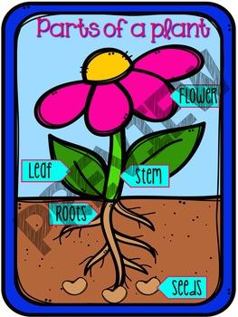 Parts of a Plant & Needs of a Plant Bundle