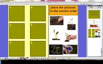 Parts of a Plant & Plant Life Cycle    { Promethean Board }