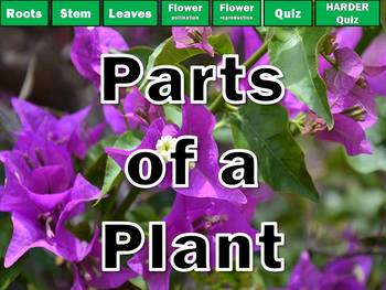 Parts of a Plant PowerPoint Review and Game NO PREP