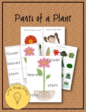 Parts of a Plant Pre-K Pack