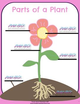 Parts of a Plant Printable - Labels & No Labels