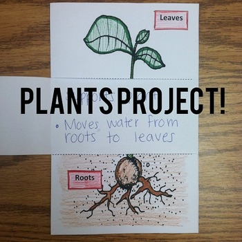Parts of a Plant Project