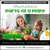 Parts of a Plant • Reading Comprehension Passages and Questions • RL II