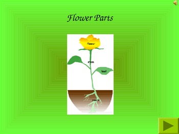 Parts of a Plant Review