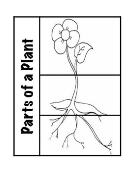 Parts of a Plant Science Interactive Foldable
