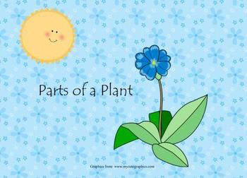 Parts of a Plant Smart Board Lesson