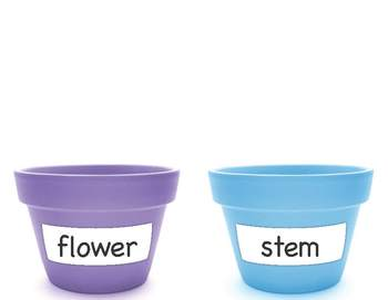 Parts of a Plant Sorting Activity
