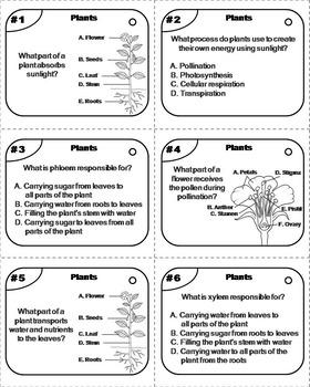 Parts of a Plant Task Cards: Stem, Seeds, Roots, Stamen, Petal Anther Pistil etc