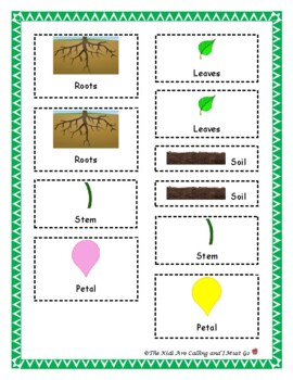 Parts of a Plant Unit Materials