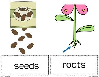 Parts of a Plant-Vocab Picture Cards