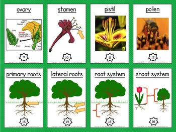 Plant Parts Trading Card Activities