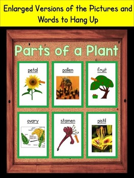 Parts of a Plant Vocabulary Interactive Notebook