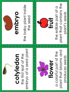 Parts of a Plant Vocabulary Pocket Activity with Word Wall Cards