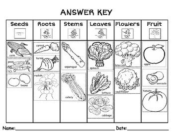 parts of a plant we eat by kindergarten kreative tpt. Black Bedroom Furniture Sets. Home Design Ideas