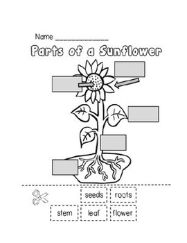 parts of a plant worksheet by erica foster teachers pay teachers. Black Bedroom Furniture Sets. Home Design Ideas
