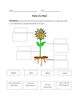 parts of a plant worksheet by paula jett teachers pay teachers. Black Bedroom Furniture Sets. Home Design Ideas