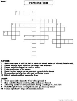 parts of a plant worksheet crossword puzzle by science spot tpt. Black Bedroom Furniture Sets. Home Design Ideas