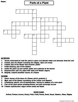 Parts of a Plant Worksheet/ Crossword Puzzle