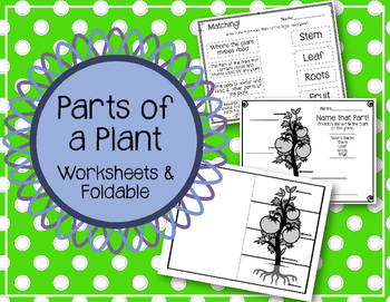 Parts of a Plant. Worksheets and Foldable.  Interactive Notebook