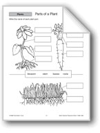 Parts of a Plant, a Tree, and Bulbs