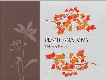SOL 4.4: Parts of a Plant PowerPoint