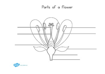 Parts of a Plant and Flower Labelling Worksheet by Twinkl ...