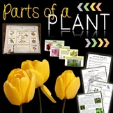 Parts of a Plant and Flower Parts Printables, Interactive Notebook, PowerPoints