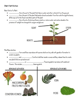 Parts of a Plant and Parts of a Flower Notes (SPANISH, ENGLISH) PREZI PRESENT