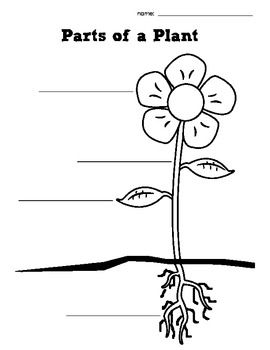 Parts of a Plant and Parts of a Tree Graphic Organizer