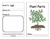 Parts of a Plant and Their Function Lesson Plan and Materials