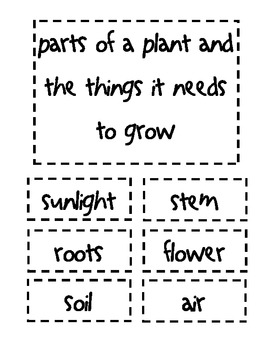 Parts of a Plant and the Things it needs to grow