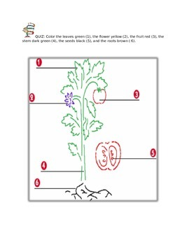 Parts of a Plant for 2nd grade`
