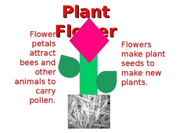 Parts of a Plant (from roots to flowers)