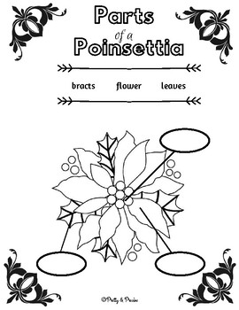 Parts  of a Poinsettia