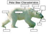 Parts of a Polar Bear