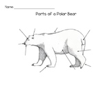 Parts of a Polar Bear Worksheet