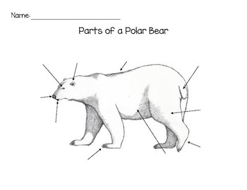 Polar Bear Worksheets Kindergarten Worksheets for all | Download ...