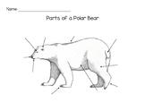 Parts of a Polar Bear Worksheet