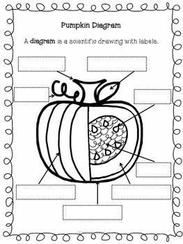 Parts of a Pumpkin Craftivity