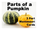 Parts of a Pumpkin Montessori Three Part Vocabulary Cards - color and blackline