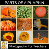Parts of a Pumpkin Photograph Pack