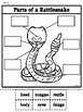 Parts of a Rattlesnake