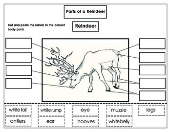 original 990956 4 parts of a reindeer label the reindeer printables included tpt