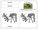 Parts of a Reindeer:Label the Reindeer Printables Included