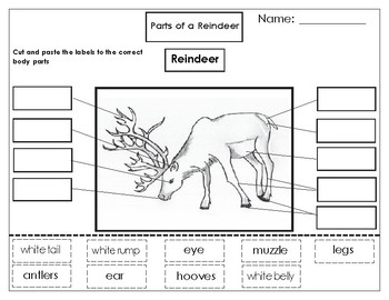 Printables: Label the parts of a Reindeer