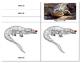 Parts of a Reptile:  Crocodile