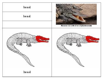 Parts Of A Reptile Crocodile By Green Tree Montessori