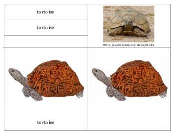 Parts of a Reptile:  Leopard Tortoise
