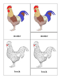 Parts of a Rooster Three Part Cards